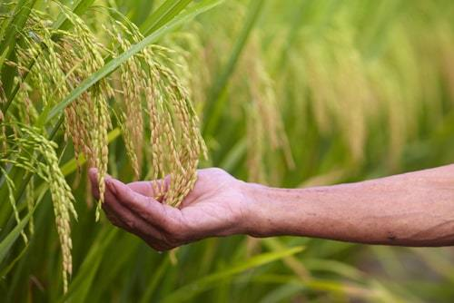 Olam International seeking applications to address Global Food Security (US$75,000 grant)